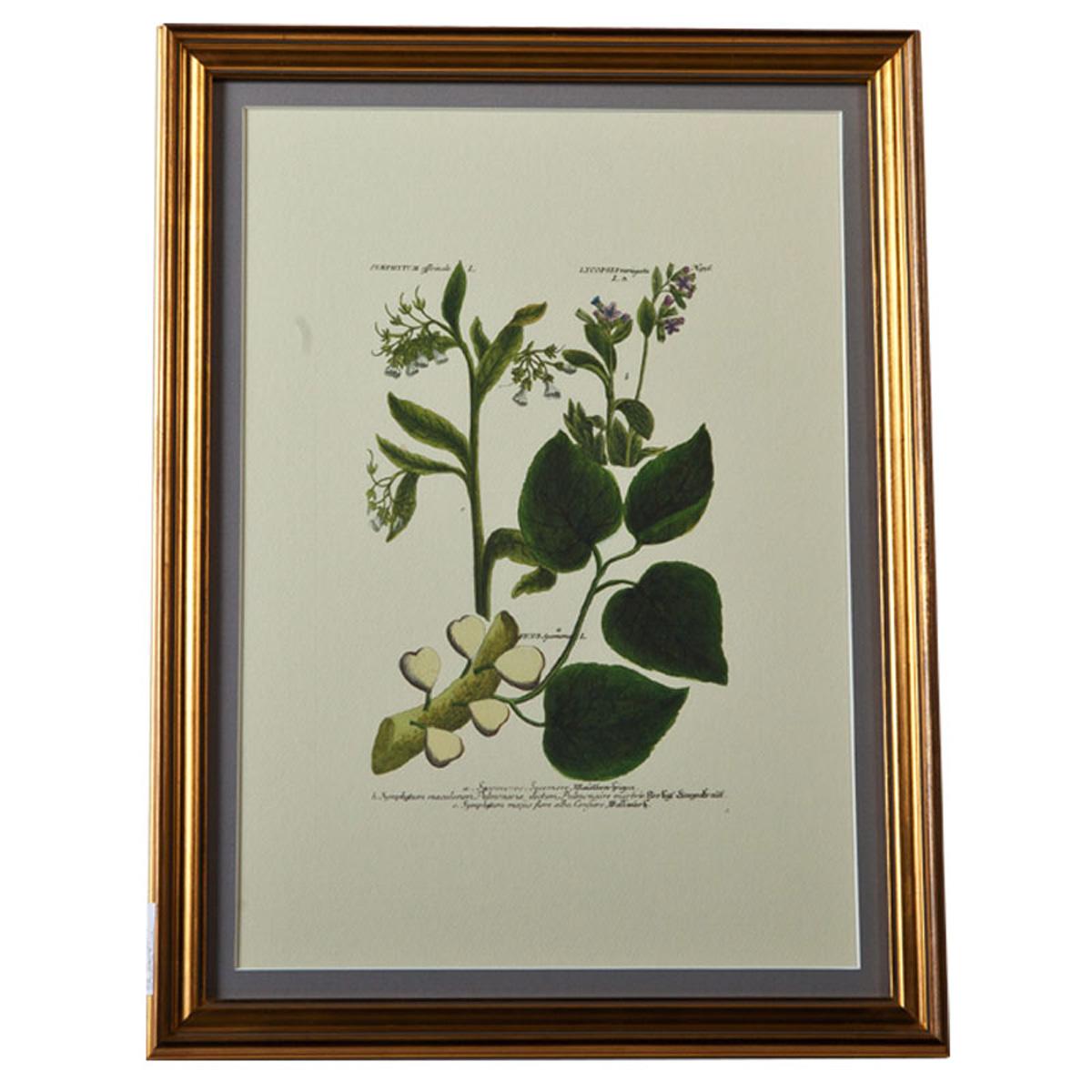 装饰画(植物)an399-k103.590*440图片