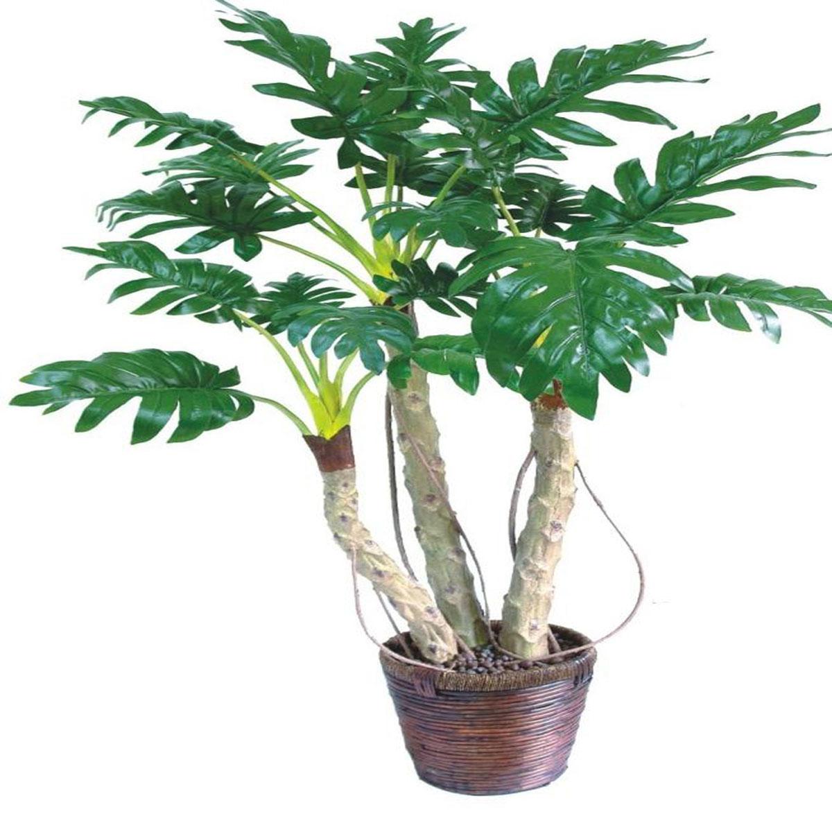 六尺木瓜盆景0.6*0.6*1.85
